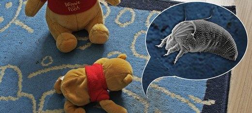 Usuwanie roztoczy z dywanu